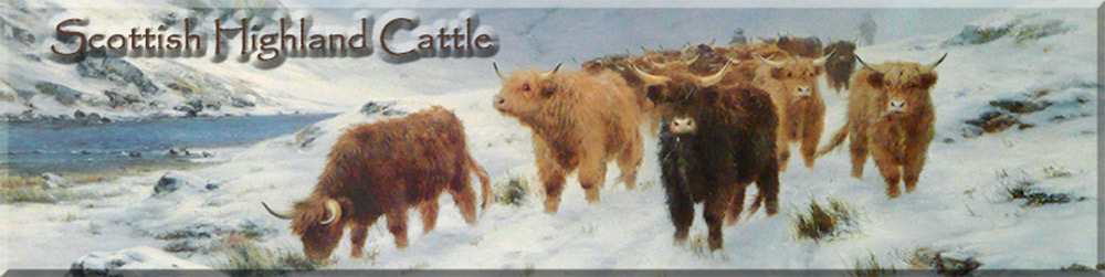 Scottish Highland Cattle -  header image