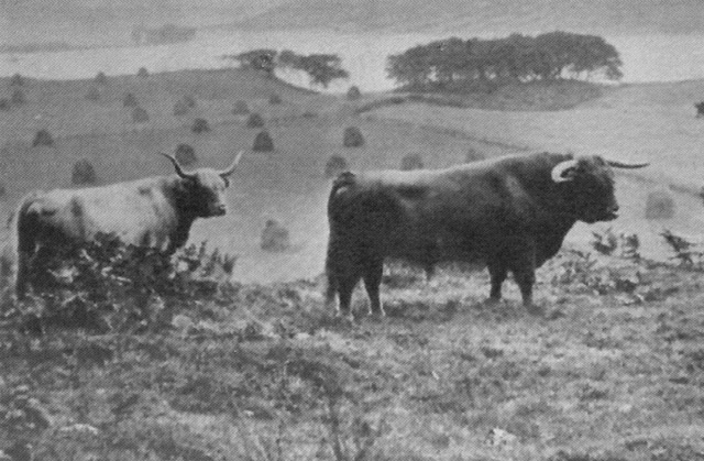 "Achnacloich 1935 Prionnsa Bhuidhe 2nd of Kilchamaig (3795) standing above the ""Field of Stones"""